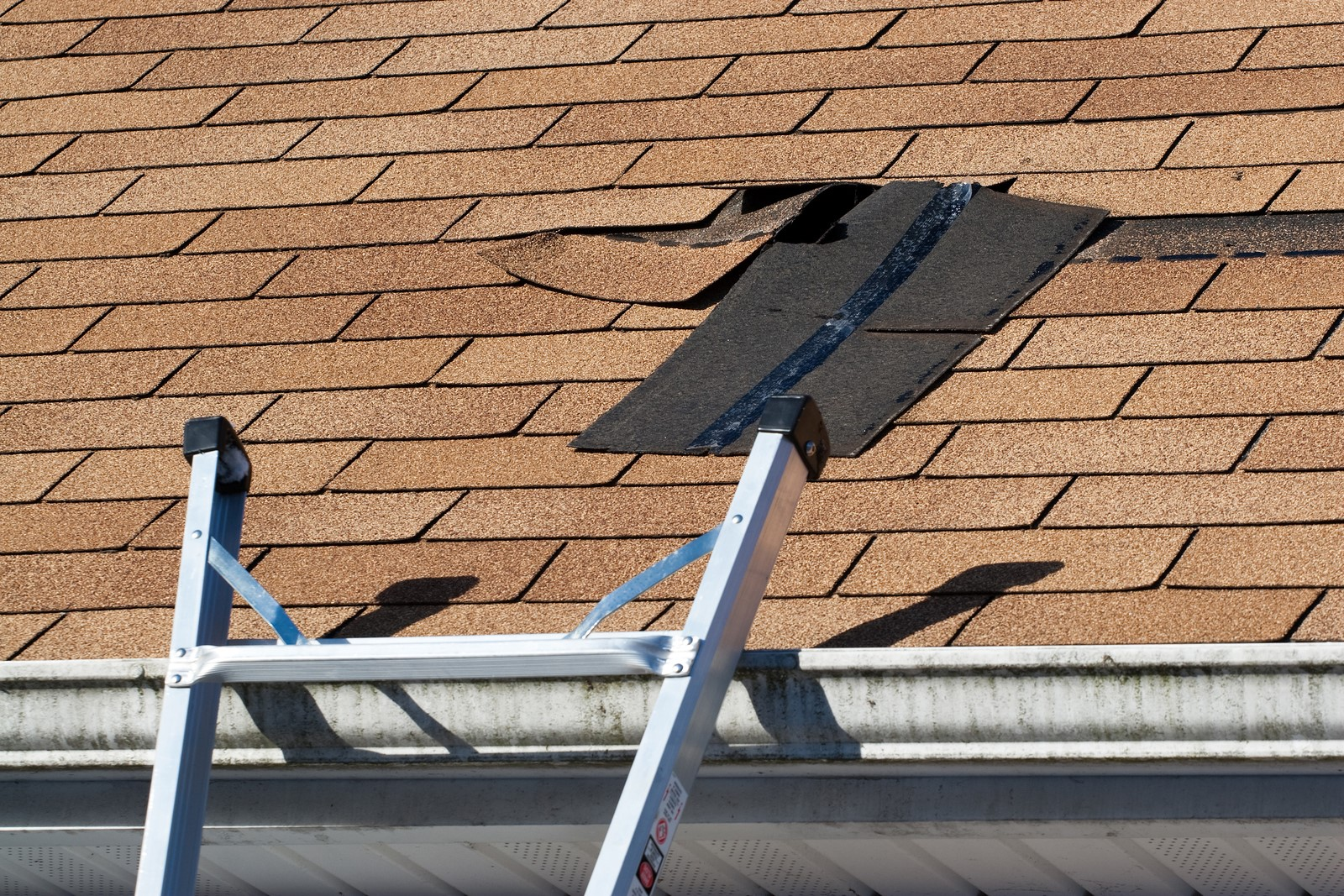 Professional Roofing Contractors